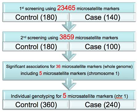 図5: 全ゲノムに配置されているマーカーから pooled DNA 法により候補領域を絞り込む